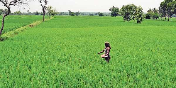 Farmland can be good investment, but beware!- The New Indian
