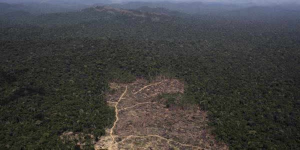 deforestation_reuters