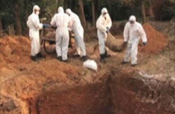 Bird flu outbreak in China