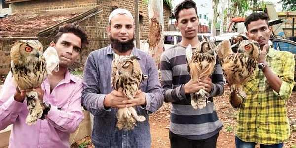 Inter-state racket in trading of eagle owls busted in