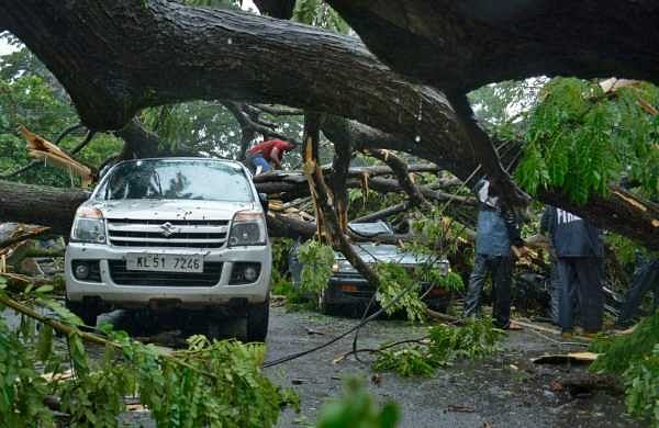Huge tree got uprooted in the heavy rain at Puthiyangadi in Kozhikode. ( Photo | EPS/Manu R Mavelil)