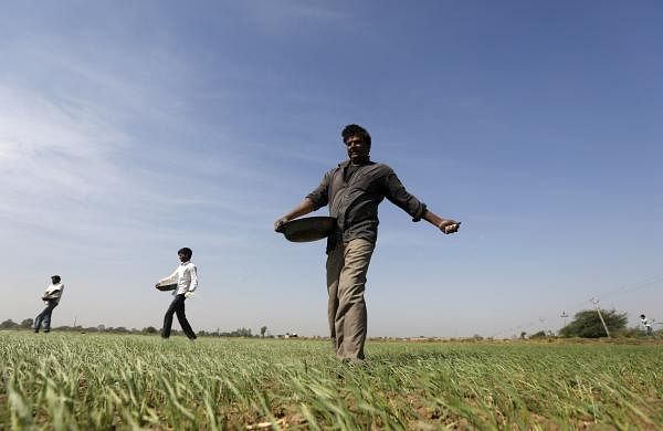 Image for representational purpose only for cultivation season of kharif paddy crops. (File photo | Reuters)
