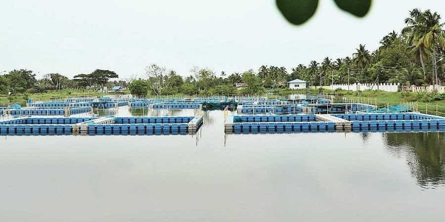 Greater Cochin Development Authority may lose Rs 4.5 crore in fish ...