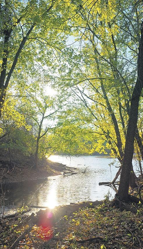 'Raincoats' for trees at Marine, Marine drive