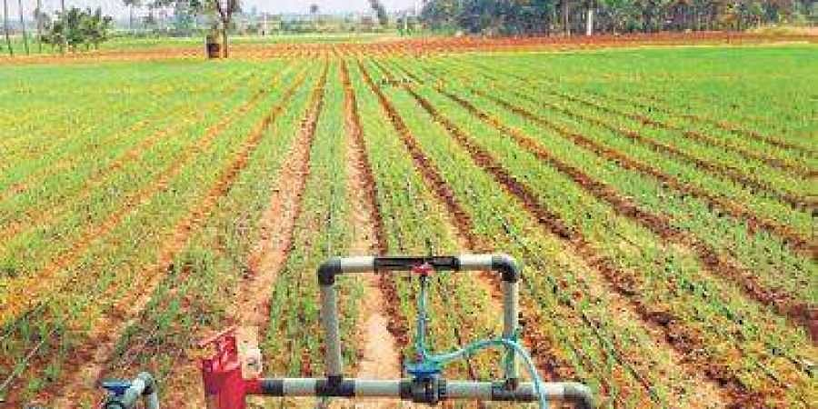 Govt's Rs 1.6K cr boost for micro-irrigation projects- The New ...
