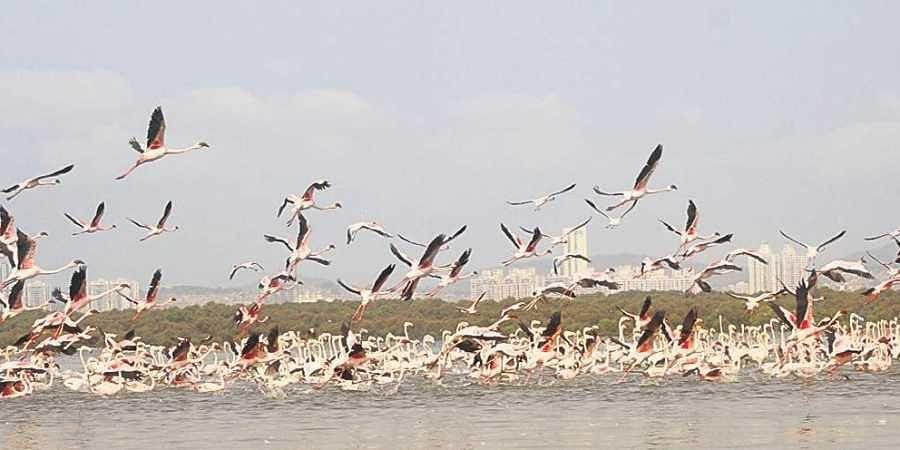 Mumbai-Ahmedabad bullet train project to hit wildlife sanctuaries