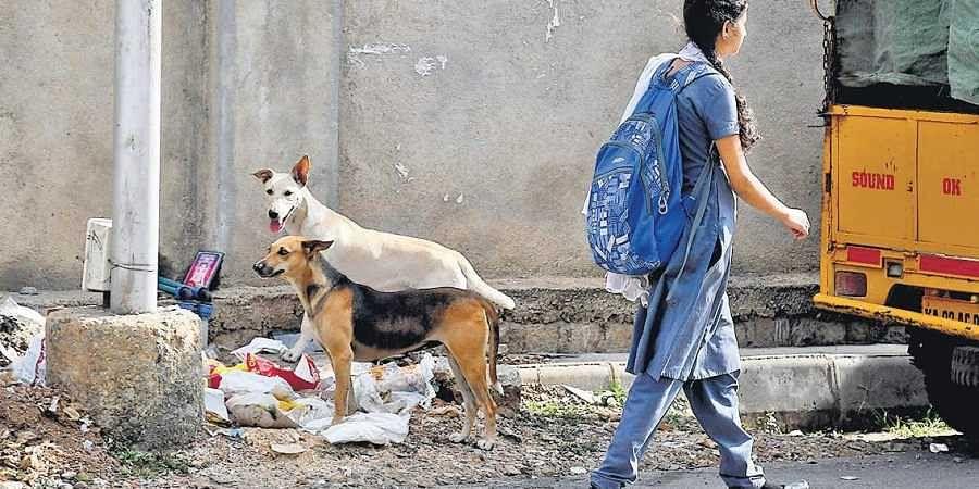 Stray dog terror returns to Bengaluru, five more attacked
