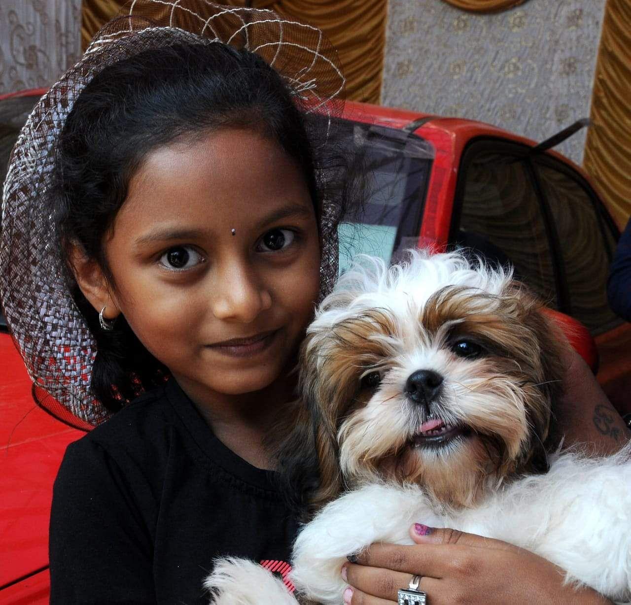 Dog, Lhasa Apso