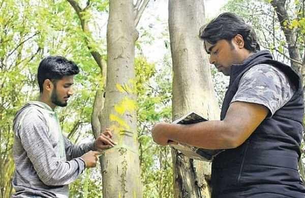 Tree census: Karnataka govt asked to file affidavit