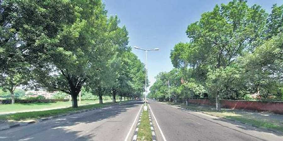 Chandigarh roads, Trees, Greenery