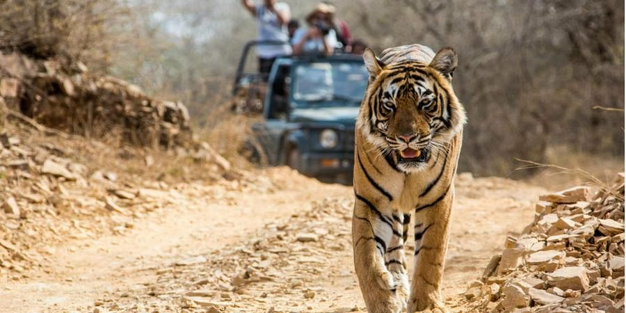 Jim Corbett National Park – A Holiday Retreat