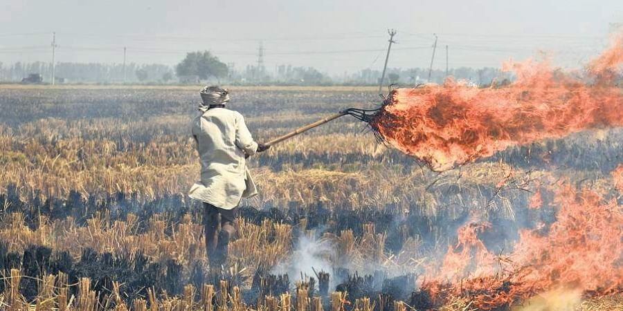 farmer, burning, agriculture, stubble burning