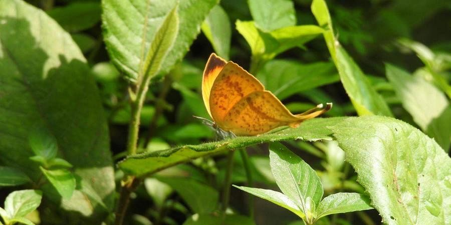 Scientists discover four butterfly species in new habitat in Chhattisgarh