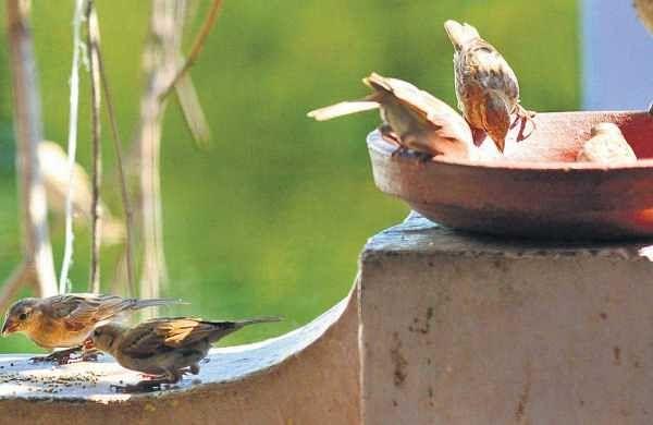 The sparrowwhisperers