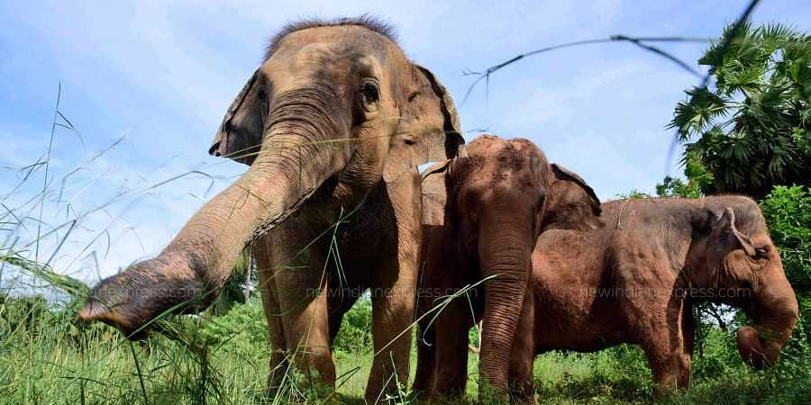 Uttarakhand High Court bans use of red chilly to ward off elephants