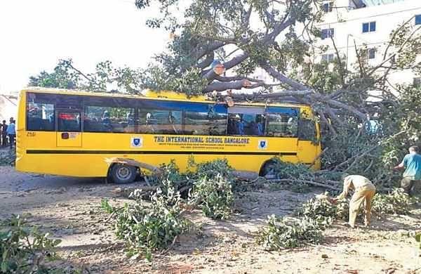 36 kids escape as tree falls on school bus