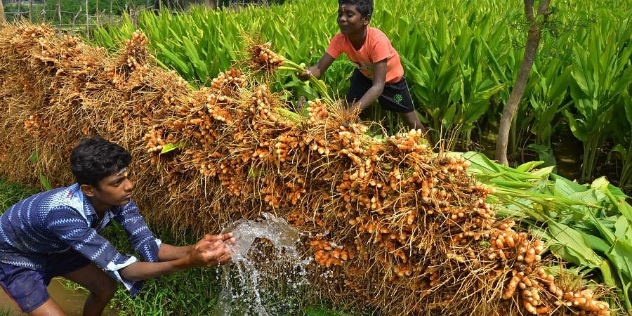 Image result for india farmer spice