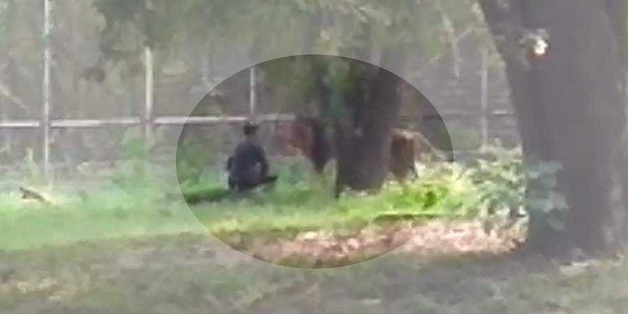 Screengrab of video in which man is seen near the lion in Delhi Zoo.