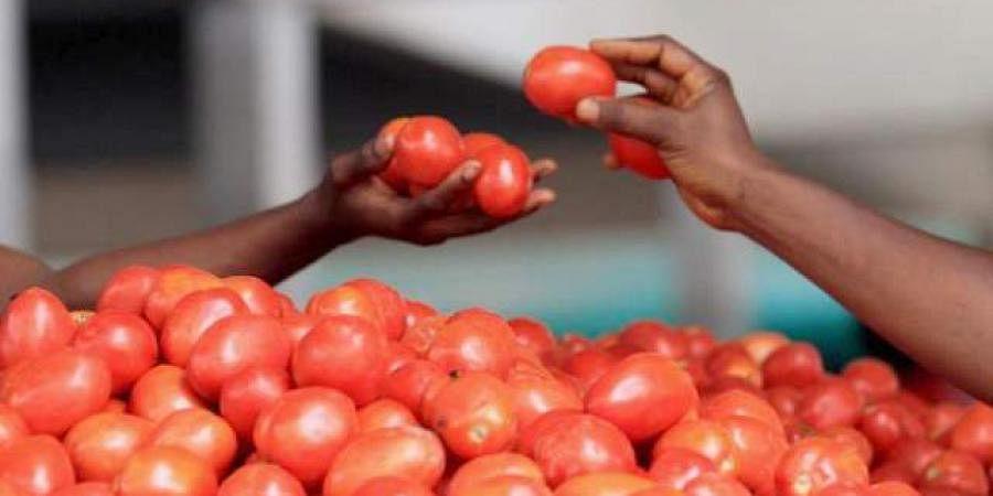 tomatoes price, tomato trade