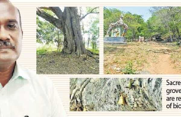 'To conserve sacred groves, leave them alone'