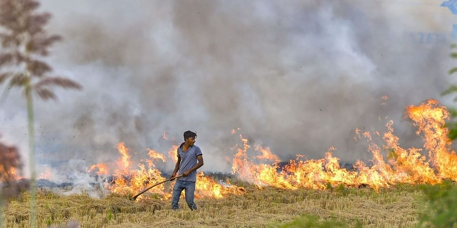 A farmer burns paddy stubbles in a field in a village in Hisar district of Haryana Friday Oct. 18 2019. | (Photo | PTI)