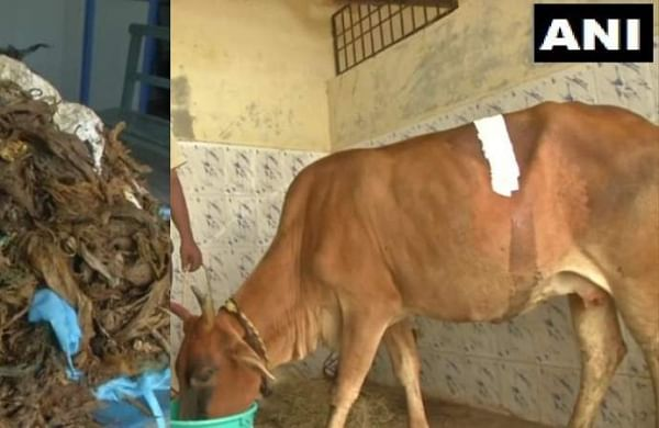 WATCH | Chennai veterinary doctors remove 52 kg plastic waste, syringes found in cow's stomach