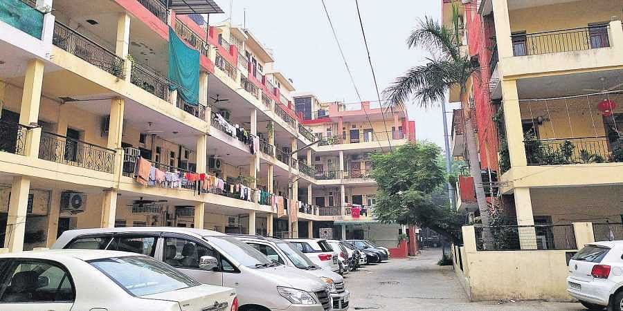 The seeminlgy peaceful DDA apartments in Naraina Vihar have been plagued by a rapid rise in number of monkeys and stray dogs