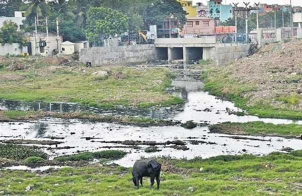 Untreated sewage still being released into Cooum river in Chennai