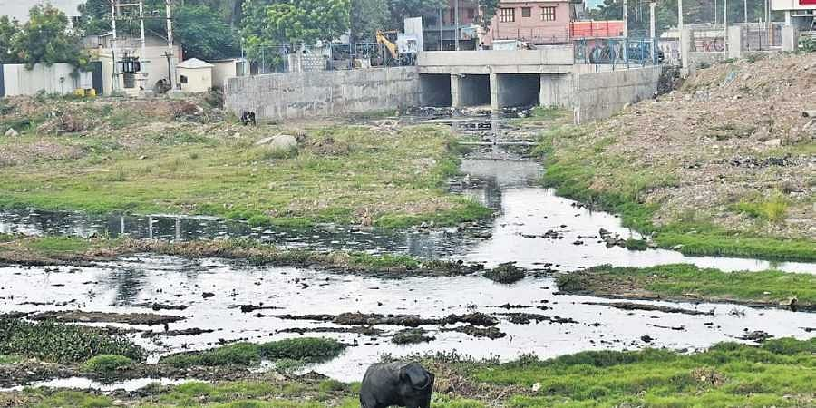 Sewage, in a canal at Mogappair West, later mixes with Cooum River on Poonamalai High Road near Maduravoyal