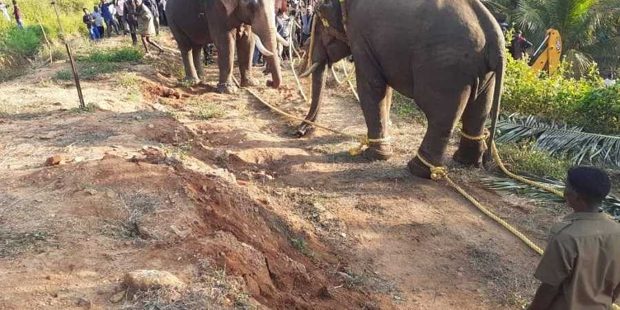 Prakash, a veterinarian of the Hosur forest department, tranquilisedthe animal at 11.23 pm. | (Photo | EPS)