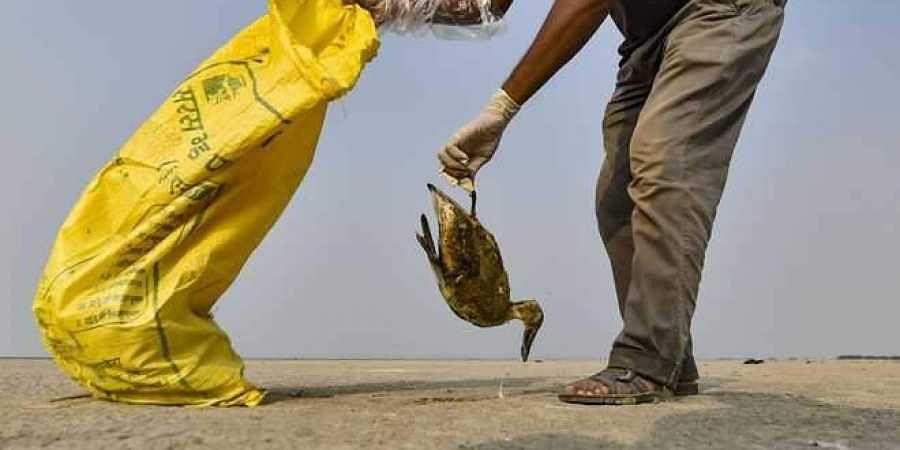 Thousands of migratory birds were found dead at Rajasthan's Sambhar Lake.