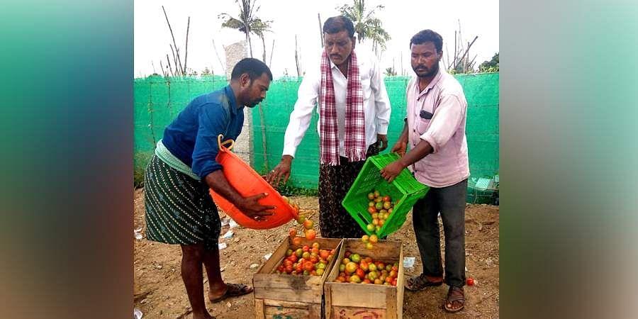 Tomato farmer Ravindra Reddy