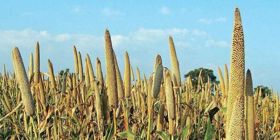 Crop, Farming, Agriculture