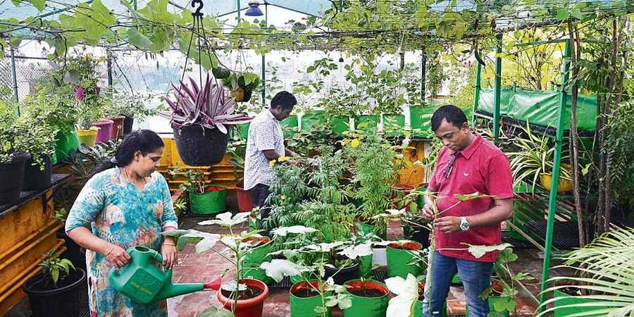 A 1500 Square Ft Organic Terrace Garden In The Heart Of Chennai The New Indian Express