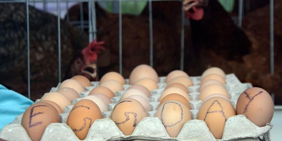 eggs, protein