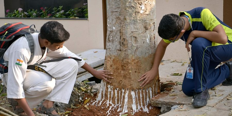 Children are looking at the holes that have been forned on the tree trunk.   (Photo   Meghana Shastry/EPS)
