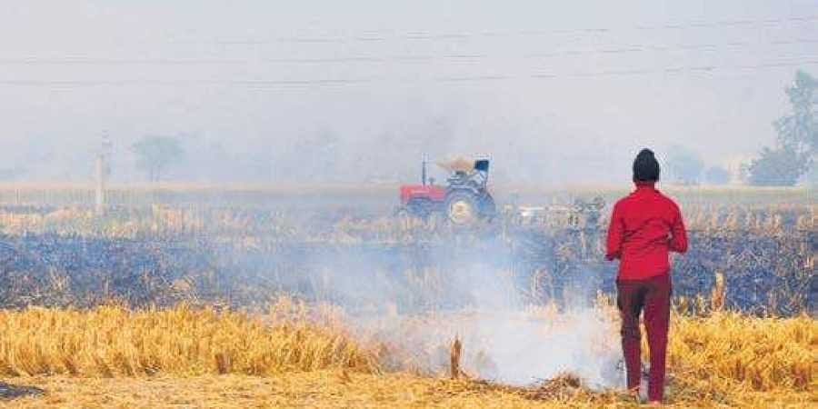 A farmer burns paddy stubble at a farm on the outskirts of Amritsar in Punjab.