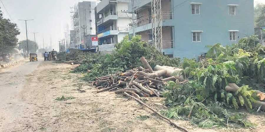 Trees felled at Nallagandala for a road expansion project in Hyderabad.