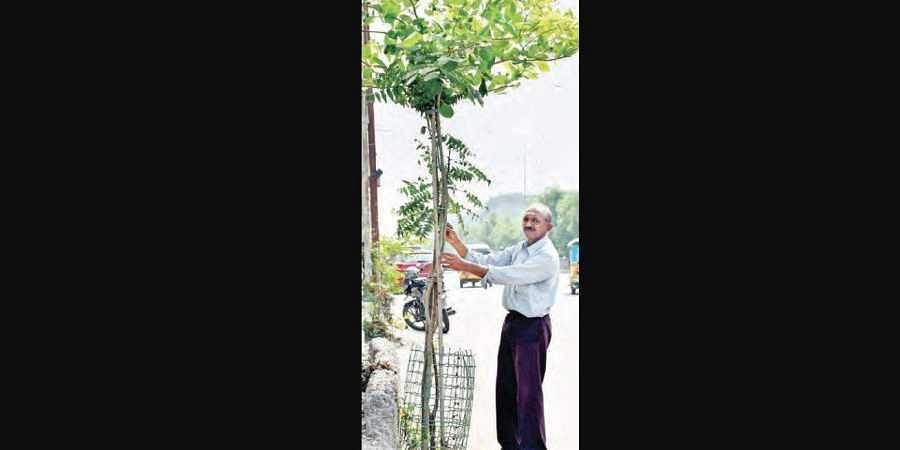 RTC mechanic P Sathyanarayana with one of the trees he planted