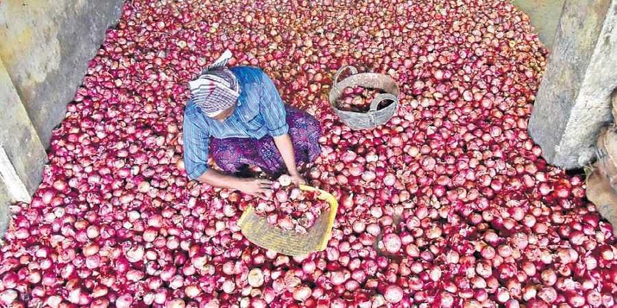 The traders purchase onions from Kurnool and Maharastra.