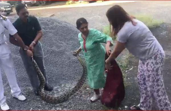 WATCH | Video of Kochi woman catching huge python goes viral