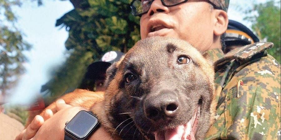 Belgian Malinois To Aid Police In Maoist Hunt The New Indian Express