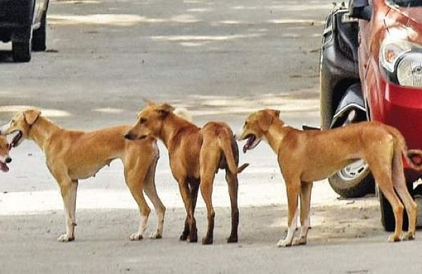 No water or food; strays,pet shop animals face death