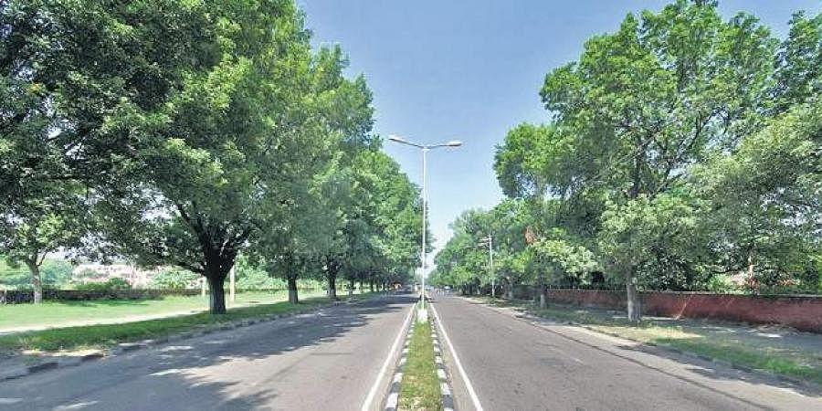 Chandigarh roads, Trees, Greenery