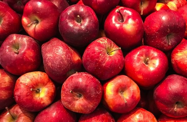 Kashmir fruit growers fear for worse as 6,000 apple trucks stuck on J&K road for 13 days