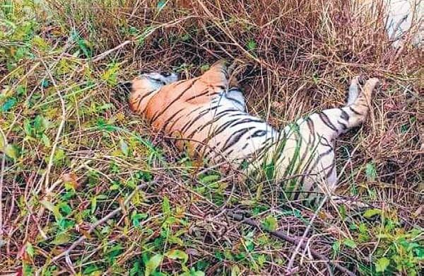 Uttarakhand issues advisory to prevent accidental deaths of wildlife