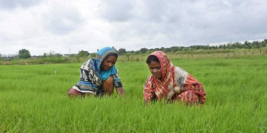 women farmers, green revolution