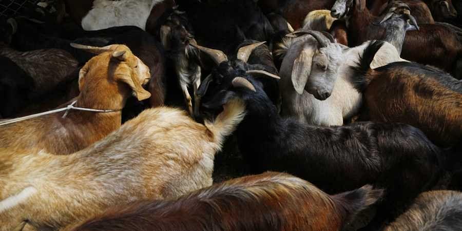 Goats die under mysterious circumstances, veterinarians