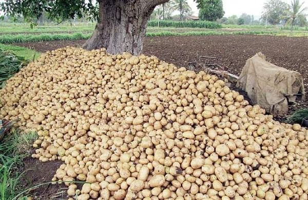 Two dalits 'thrashed' in Uttar Pradesh's Bulandshahr for stealing potatoes