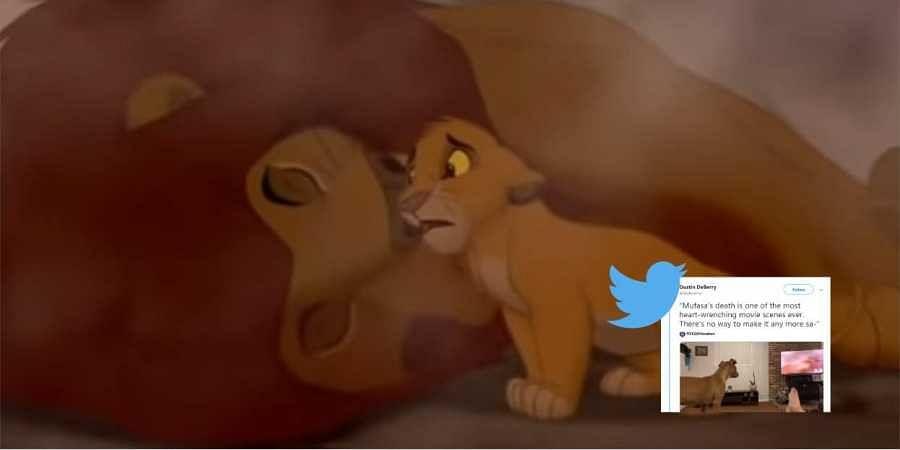 Simba, lion king